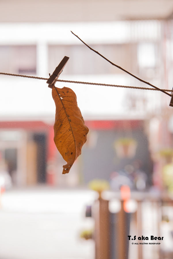 13 Leaves | Conceptual Sculpture by Tiong-seah Yap [ T.S aka Bear ] 2018 © All rights reserved
