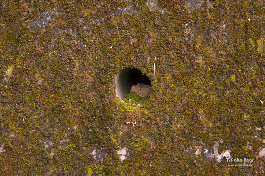 Conceptual Photography - 12 Variations of hole by Tiong-seah Yap [ T.S aka Bear ] © Year 2018 All rights reserved